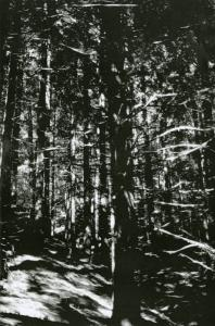 Wolfgang Tillmans, Wald (Rheinshagen), 2008
